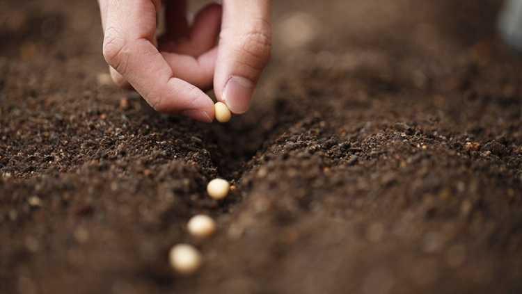 Jornal Campeão: Dueceira tem 750 mil euros para apoiar agricultores e produtores