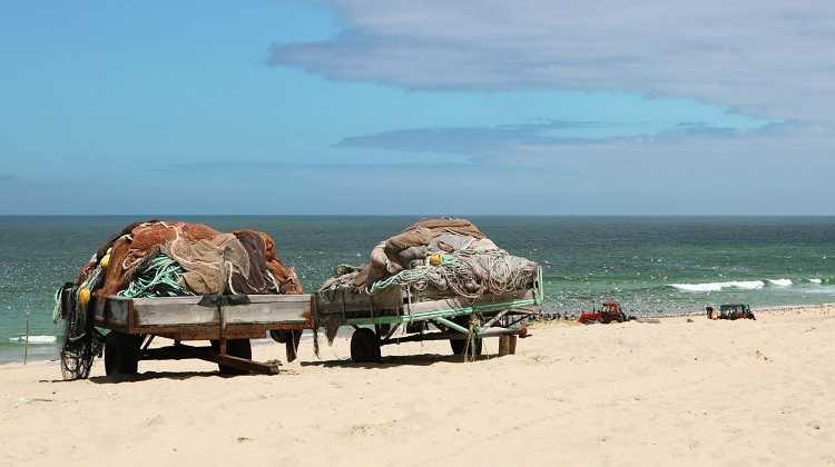 Jornal Campeão: Pescadores da Praia de Mira cortam redes para soltar golfinhos