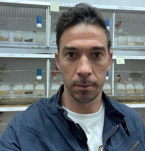 Pedro Miguel Araújo - UC
