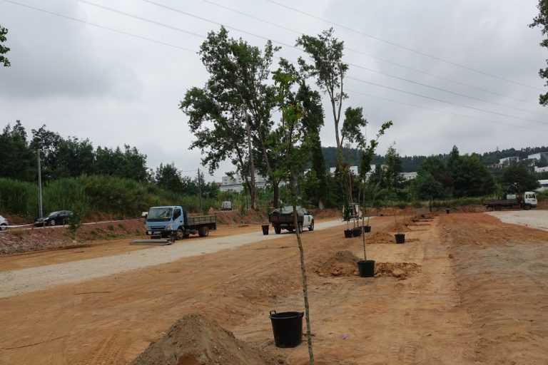 Jornal Campeão: Câmara de Coimbra planta três centenas de árvores no Rebolim