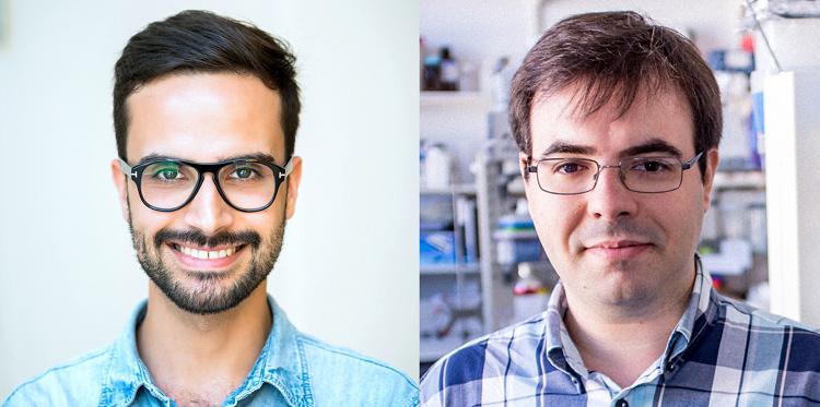 Jornal Campeão: Cientistas da UC em estudo pioneiro que aprofunda a cartografia do cérebro
