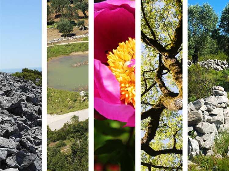 Jornal Campeão: Associação apresenta projecto para maciço do Sicó ser paisagem protegida