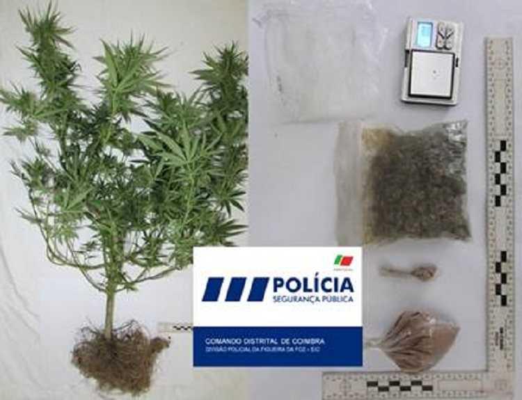 Jornal Campeão: Figueira da Foz: Homem em prisão domiciliária detido por tráfico de droga