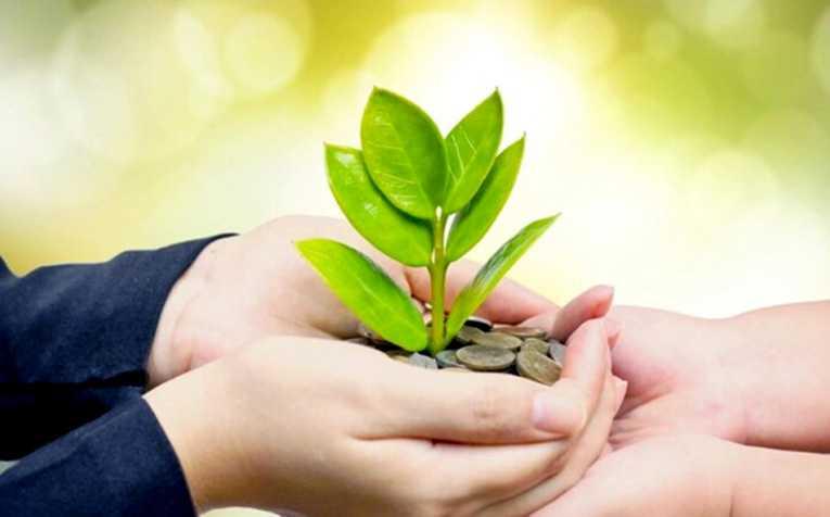 Jornal Campeão: Pegada Ecológica: o driver do crescimento empresarial