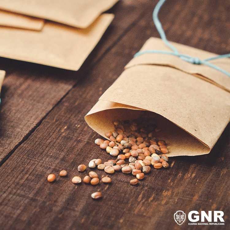 Jornal Campeão: Ministério da Agricultura e GNR alertam para sementes não solicitadas