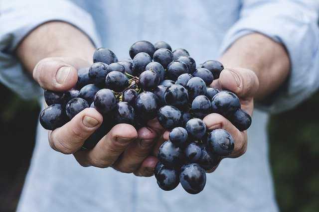 Jornal Campeão: Anadia: Governo defendeu melhor pagamento aos produtores de uvas