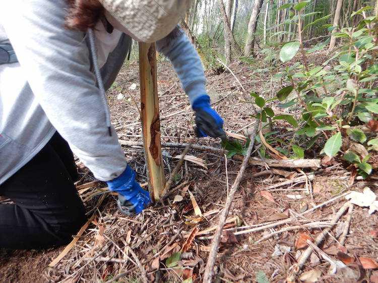Jornal Campeão: Lousã: Voluntariado ambiental na Mata do Sobral vai contar com nova acção
