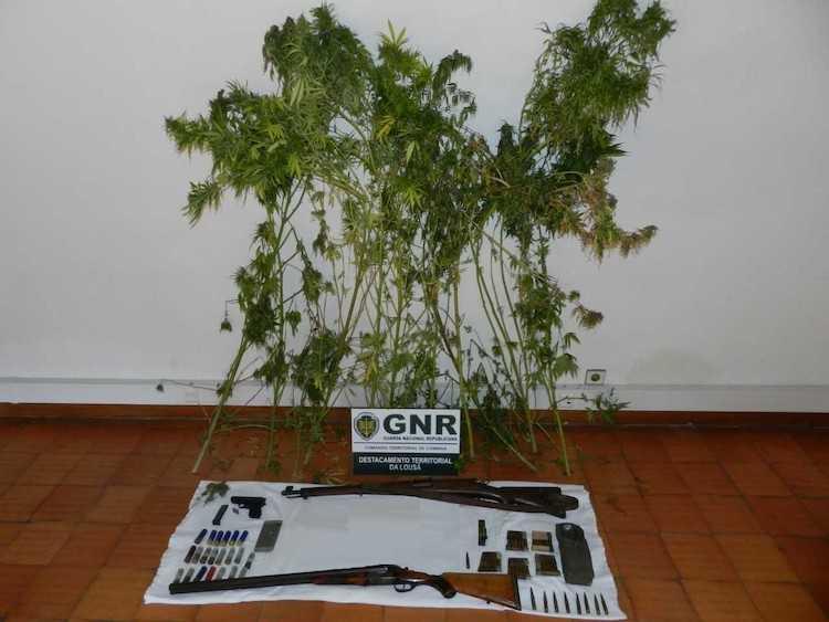 Jornal Campeão: Homem detido em Góis por tráfico de droga e posse de arma ilegal