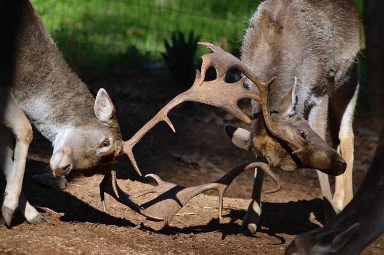 Jornal Campeão: Passeio ao anoitecer no Parque Biológico para conhecer a brama dos veados