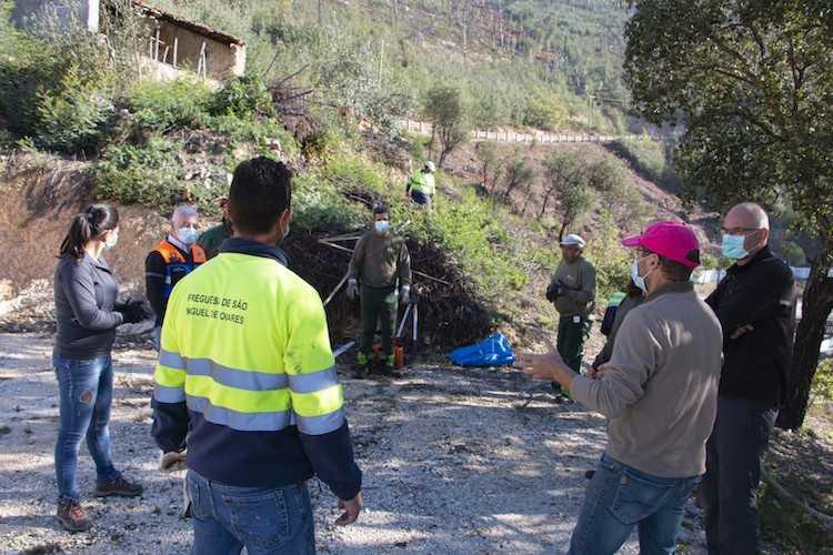 Jornal Campeão: Acção na Serra da Fraga em Poiares combate espécies invasoras