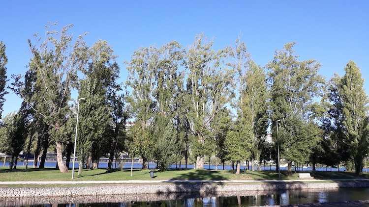 Jornal Campeão: Parque do Choupalinho acolhe campanha de apanha de folhas
