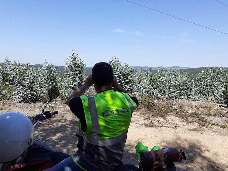 Jornal Campeão: Vigilância florestal em Anadia termina com balanço positivo