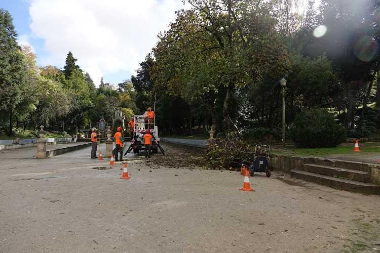 Jornal Campeão: Câmara de Coimbra iniciou intervenção no património arbóreo do Jardim da Sereia