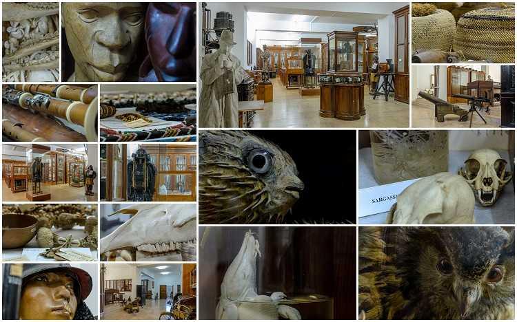 Jornal Campeão: Colecções do Museu da Figueira da Foz integram projecto de investigação