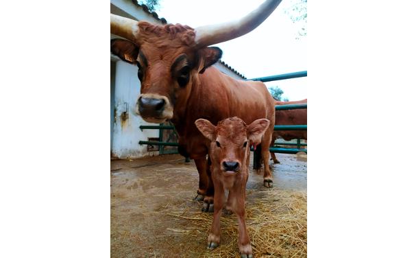 Jornal Campeão: Nasceram três vitelos no Parque Biológico da Serra da Lousã