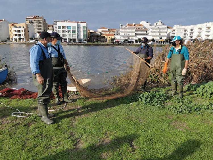 Jornal Campeão: Município recorda importância e história dos viveiros da Praia de Mira