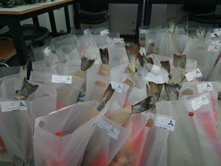 Jornal Campeão: Anadia atribui 150 cabazes de Natal a famílias carenciadas