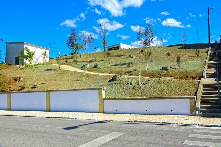 Jornal Campeão: Coimbra vai plantar quase 2000 árvores em 2021