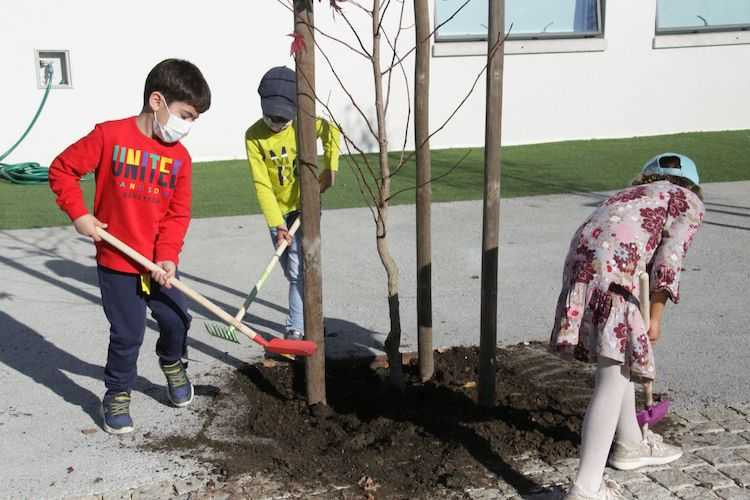 Jornal Campeão: Anadia assinala Dia da Floresta Autóctone com plantação de árvores