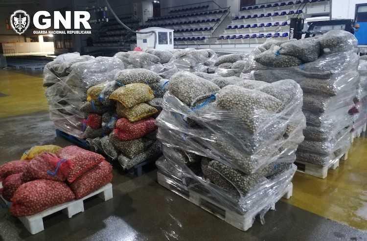 Jornal Campeão: GNR apreende mais de oito toneladas de berbigão em Aveiro