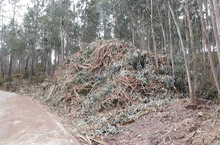 Jornal Campeão: Anadia apela à remoção de sobrantes de exploração para defesa da floresta
