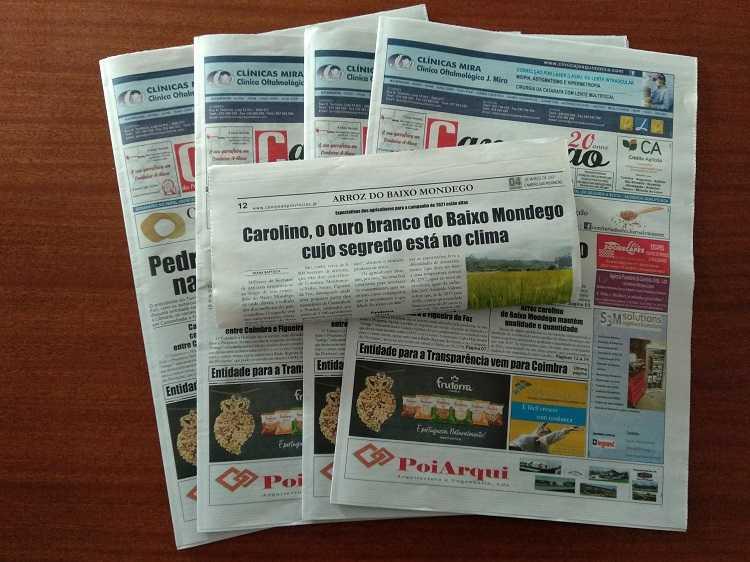 Jornal Campeão: Carolino, o ouro branco do Baixo Mondego cujo segredo está no clima