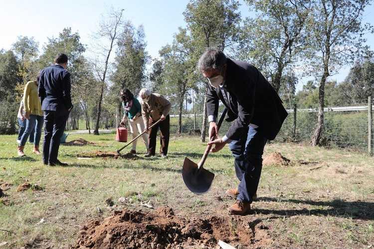 Jornal Campeão: Lousã irá plantar 40 000 árvores no concelho este ano