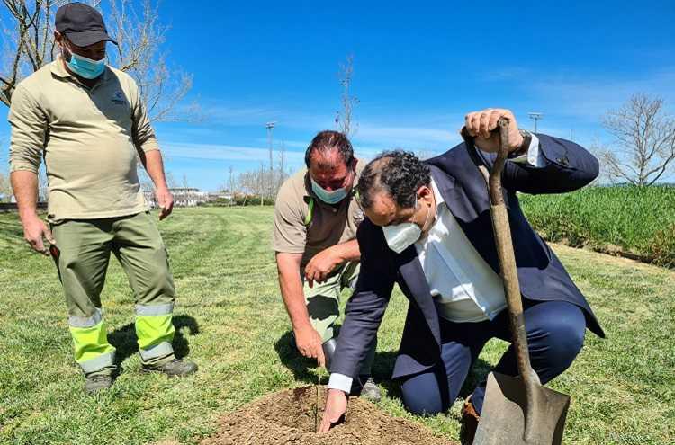 Jornal Campeão: Presidente da Câmara de Condeixa associa-se a campanha e planta uma árvore