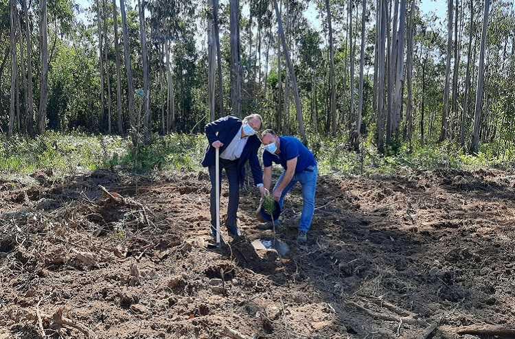 Jornal Campeão: Cantanhede planta árvores autóctones nas faixas de gestão de combustível de Murtede