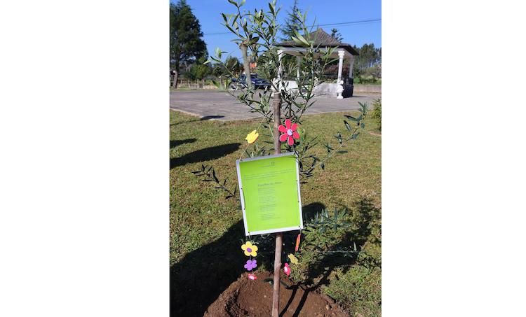 Jornal Campeão: Município de Anadia planta oliveiras em todas as freguesias do concelho