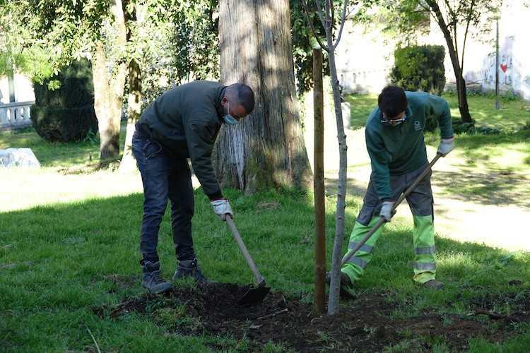 Jornal Campeão: Coimbra celebra Dia Mundial da Árvore com a plantação de 200 exemplares