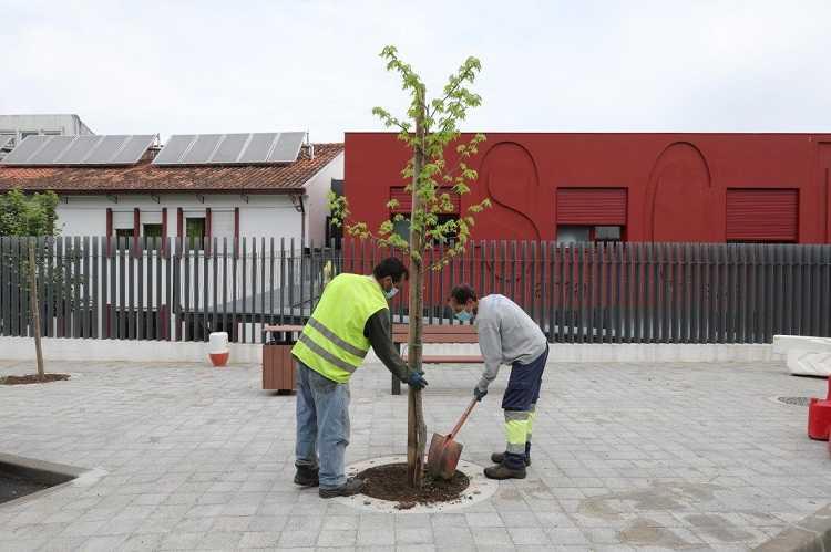 Jornal Campeão: Plantadas cerca de 75 árvores em espaço urbano na Lousã