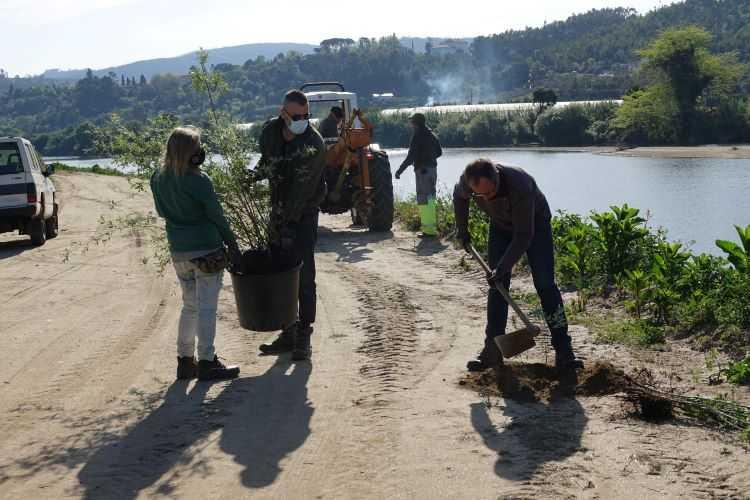 Jornal Campeão: Câmara de Coimbra iniciou plantação de árvores entre o Rebolim e a ponte da Portela