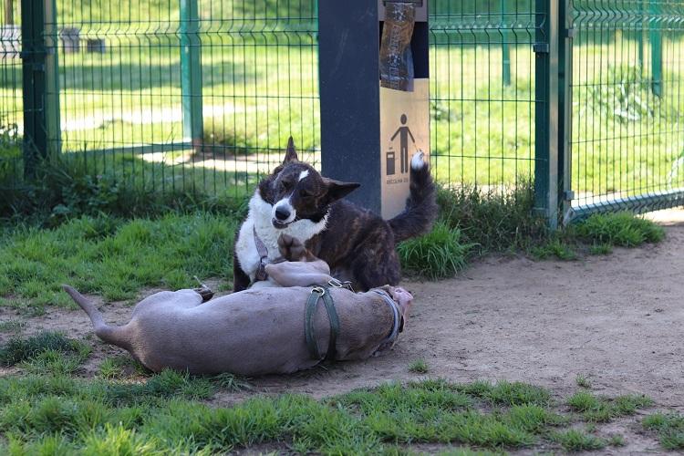 Jornal Campeão: Parque Canino de Coimbra vai ser inaugurado no sábado