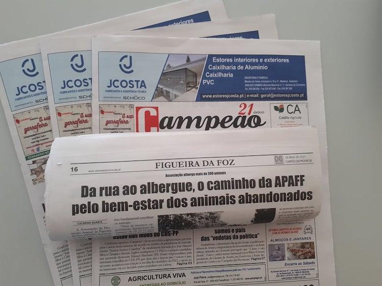 Jornal Campeão: Da rua ao albergue, o caminho da APAFF pelo bem-estar dos animais abandonados