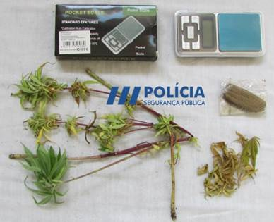 Jornal Campeão: Mulher detida na Figueira da Foz cultivava liamba