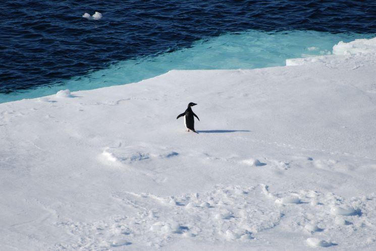 Jornal Campeão: Estudo da UC revela presença de microplásticos em pinguins da Antártida