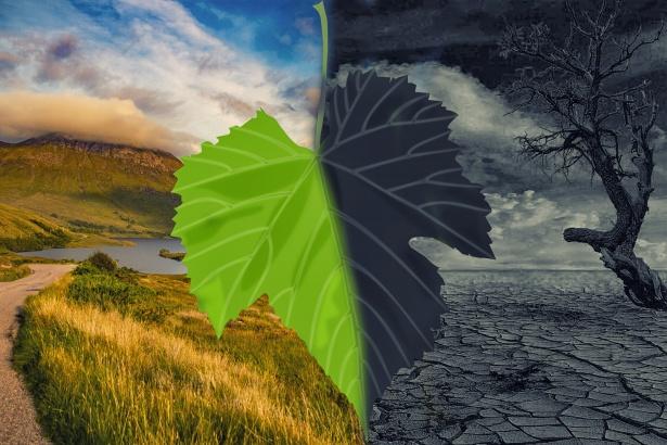Jornal Campeão: Programa municipal de Coimbra para as alterações climáticas está concluído