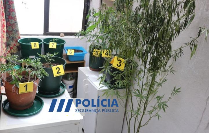 Jornal Campeão: Incêndio em habitação de Coimbra revela plantação de canábis