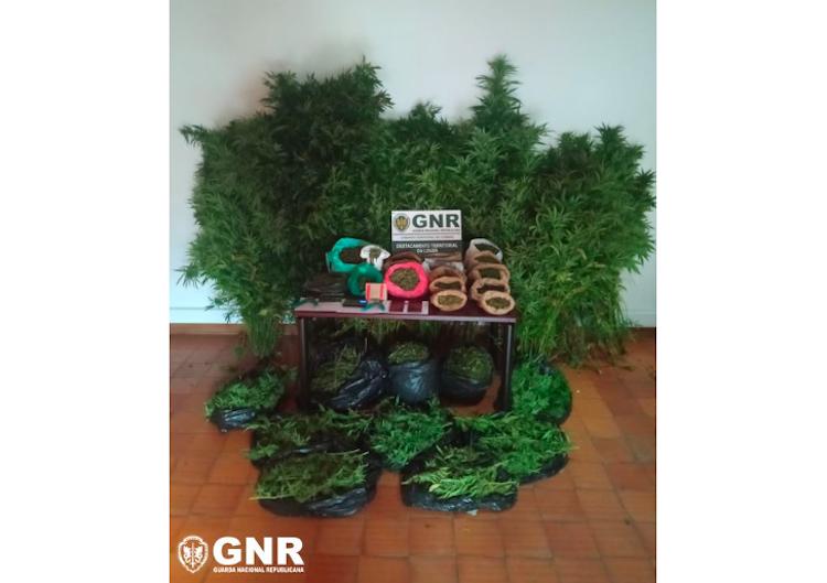 Jornal Campeão: GNR detém dois homens com mais de 4.500 doses de canábis na Pampilhosa da Serra